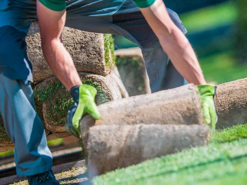 Laying turf as part of our garden maintenance Eltham, Park Orchards, and Temlestowe services